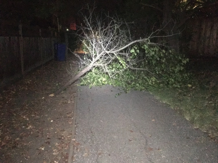 A substantial branch has fallen across a small trail